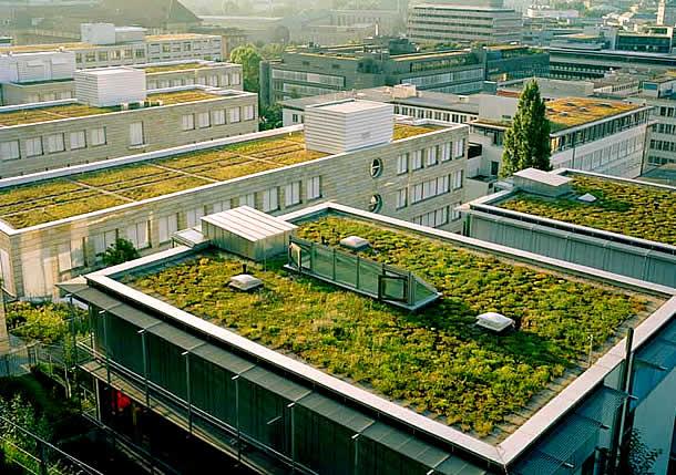 Telhados ecológicos em Stuttgart, Alemanha, onde regulamentações municipais exigem, desde 1989, que todas as construções novas com laje os instalem.